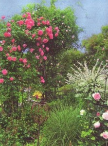 Приглашаем в царство роз