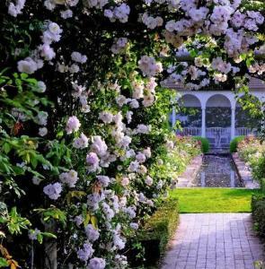 Любимый цветок англичан