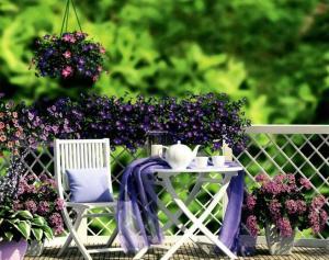 Петуния – применение в саду